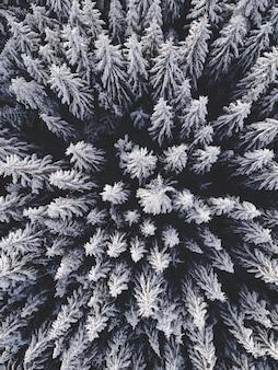 Vista aérea de un hermoso paisaje invernal con abetos cubiertos de nieve Foto gratis