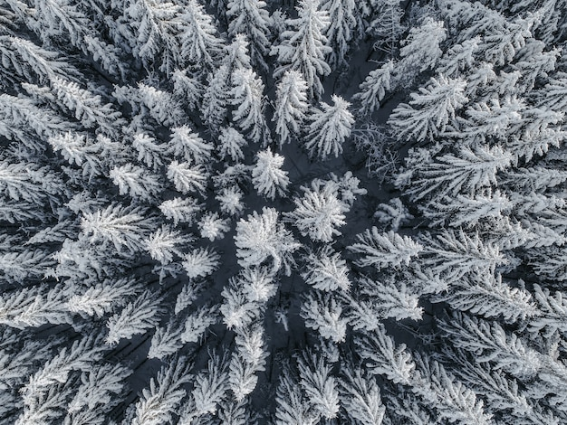 Vista aérea de un hermoso paisaje invernal con abetos cubiertos de nieve