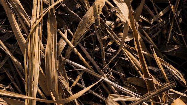 Vista aérea de hierba seca