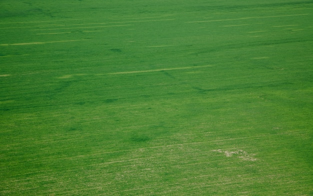 Vista aérea de hierba verde en el prado