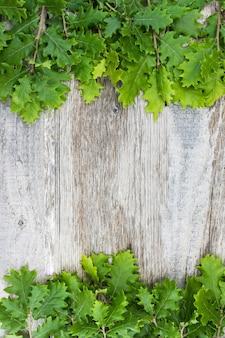 Vista aérea de hojas frescas de bellota sobre superficie de madera vieja
