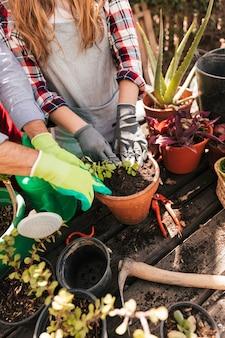 Vista aérea de un jardinero masculino y femenino que planta la plántula en la maceta.