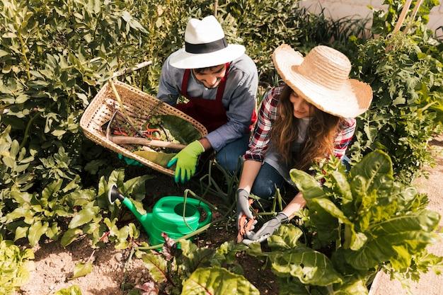 Vista aérea de un jardinero masculino y femenino que trabaja en el huerto.