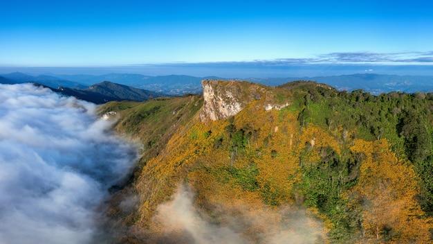 Vista aérea de las montañas de phu chi fa con flor mexicana en chiang rai, tailandia