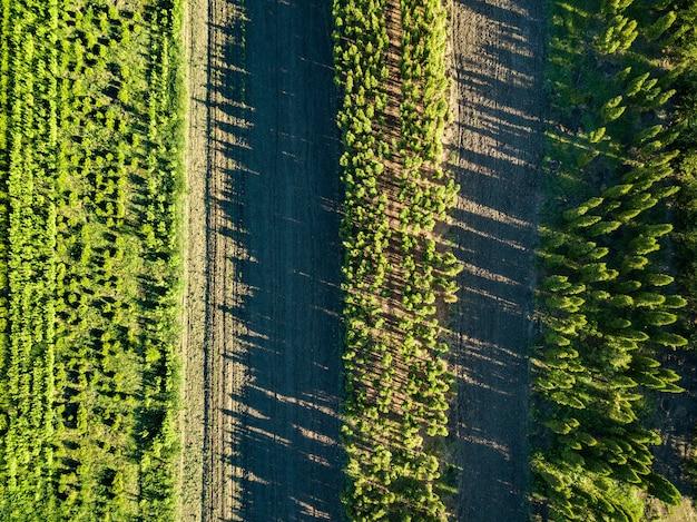 Vista aérea de muchos jóvenes que crecen en una fila de árboles en el campo.