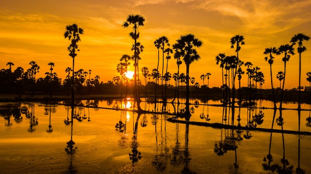 Vista aérea de la palmera de azúcar con el cielo del atardecer