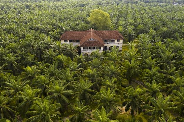 Vista aérea de una palmera en una plantación de aceite de palma en el sudeste asiático