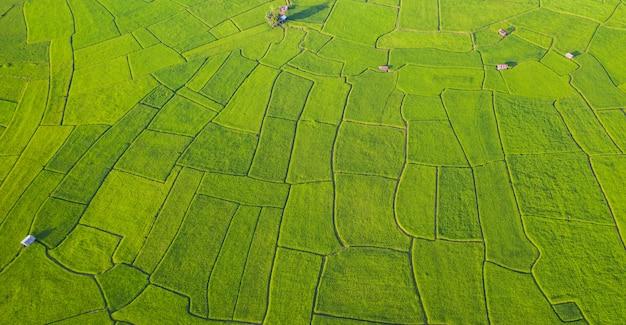 Vista aérea del patrón diferente de paisaje de campo de arroz verde y amarillo en la mañana en el norte de tailandia
