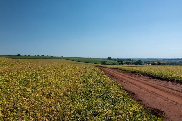 Vista aérea de la plantación de soja en un día soleado en brasil.