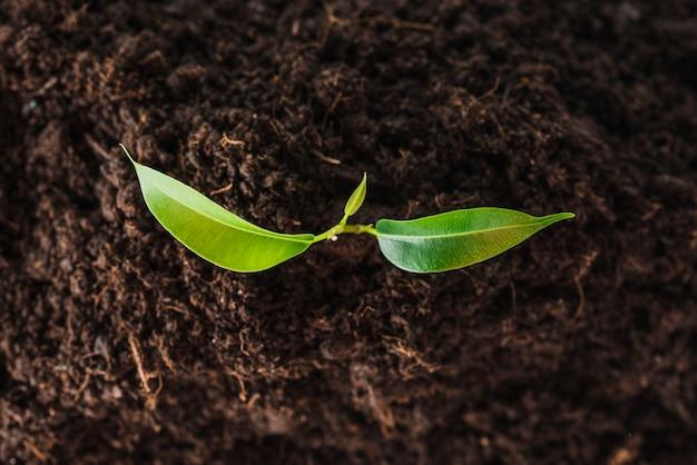 Vista aérea de las plántulas que crecen en el suelo.