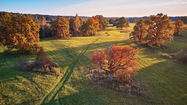 Vista aérea de robles en otoño, sombra en la pradera. carretera nacional en campos verdes. panorama aéreo soleado, bielorrusia. paisaje con alcornoques. hermosos colores de la temporada de otoño.