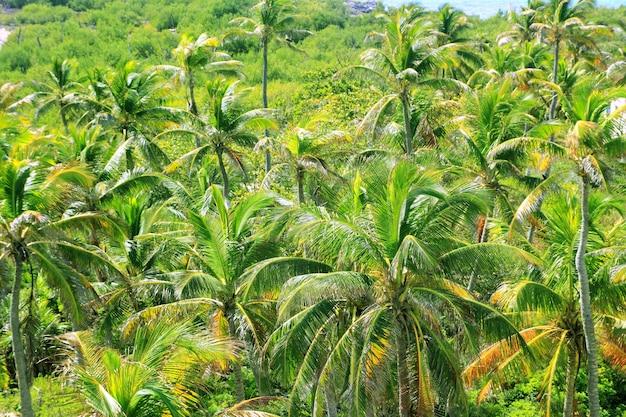 Vista aérea de la selva de palmeras en el caribe
