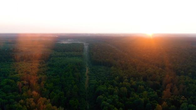 Vista aérea sobre un hermoso bosque de pinos en la puesta del sol