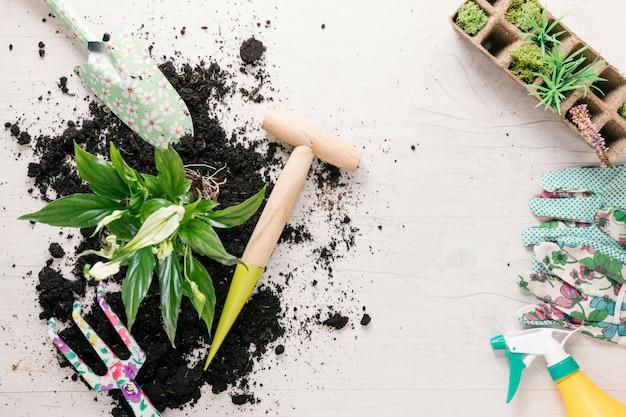 Vista aérea de suelo y planta con equipos de jardinería en mesa