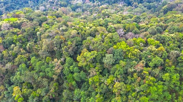 Vista aérea superior del bosque, fondo parque natural