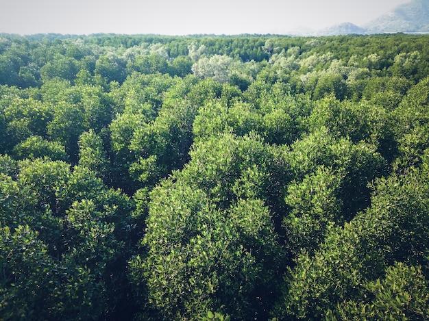 Vista aérea superior del bosque, textura del bosque. vista de un bosque de manglares en tailandia desde un punto de vista alto.