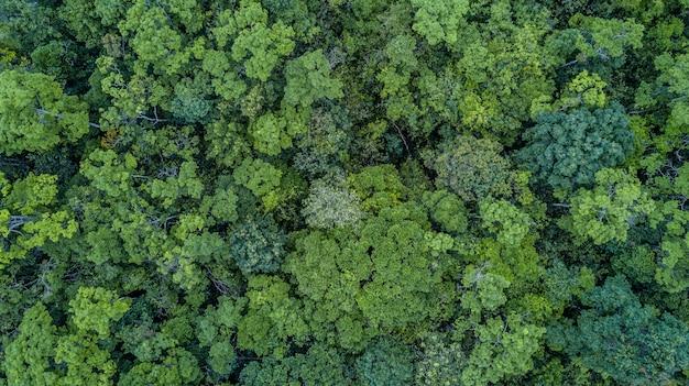 Vista aérea superior del bosque,