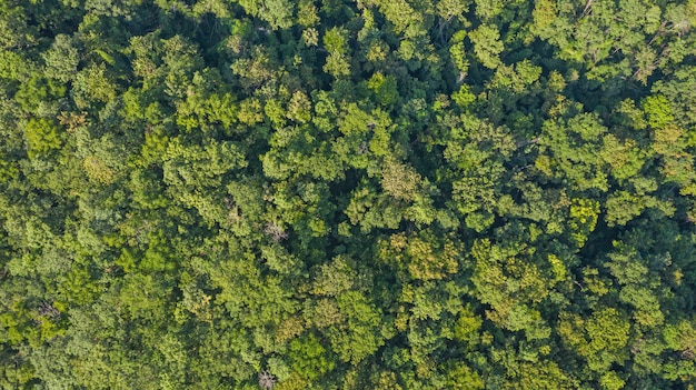 Vista aérea superior del bosque
