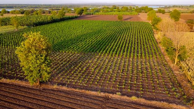 Vista aérea superior del campo agrícola
