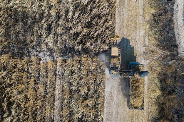 Vista aérea superior de los cortadores de caña de azúcar están trabajando al aire libre