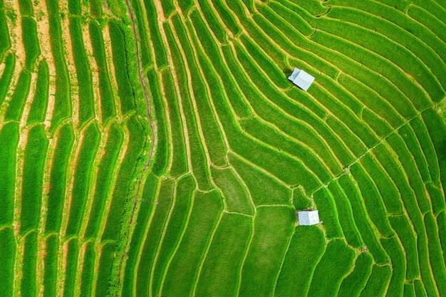 Vista aérea de la terraza de arroz en ban pa bong piang en chiang mai, tailandia