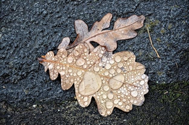 Vista de ángulo alto de hojas cubiertas de rocío de la mañana en el suelo cubierto de musgo