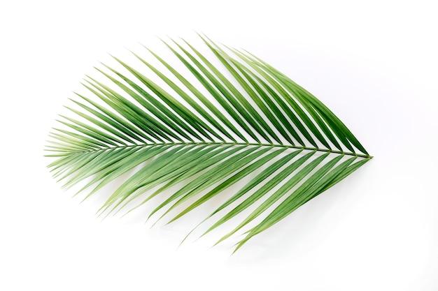 Vista de ángulo alto de una palma tropical deja aislada en el contexto blanco