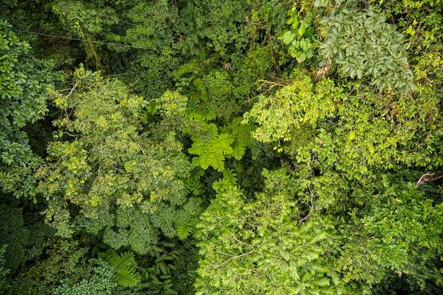 Vista de ángulo alto de ramas de árboles en la selva tropical en costa rica