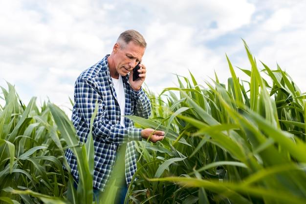Vista de ángulo bajo hombre inspeccionando una hoja de maíz