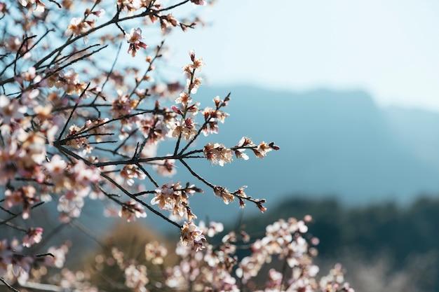 Vista en ángulo de ramas florecientes con espacio de copia