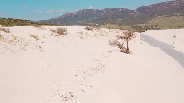 Vista del árbol seco en la colina de arena
