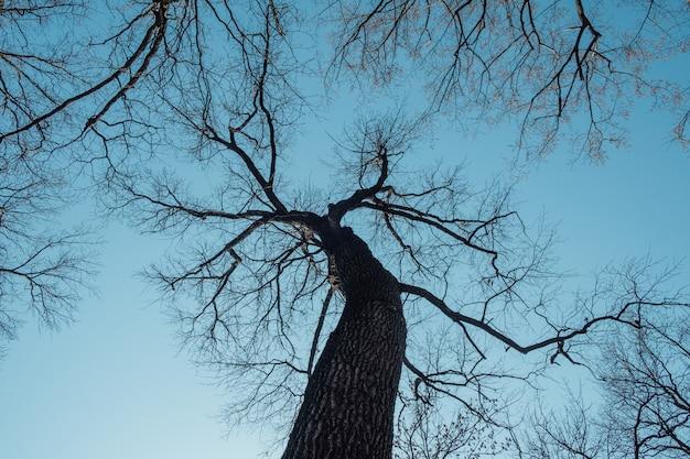 Vista de árboles desde arriba con cielo azul. estructura de ramas de arboles en primavera