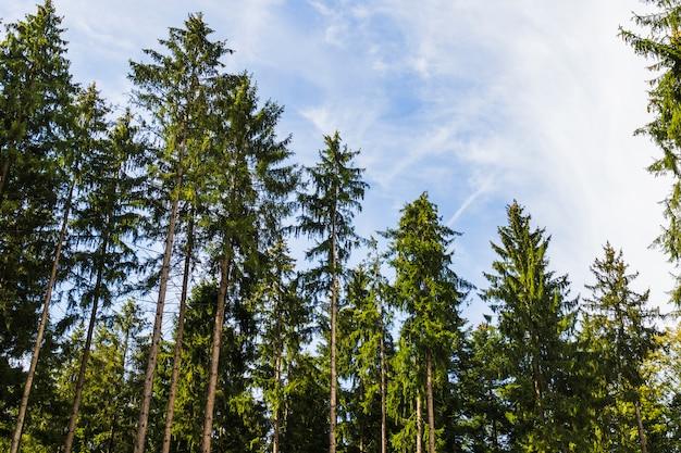 Vista de árboles desde dentro de un bosque