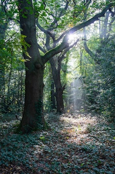 Vista de árboles verdes y rama en el bosque