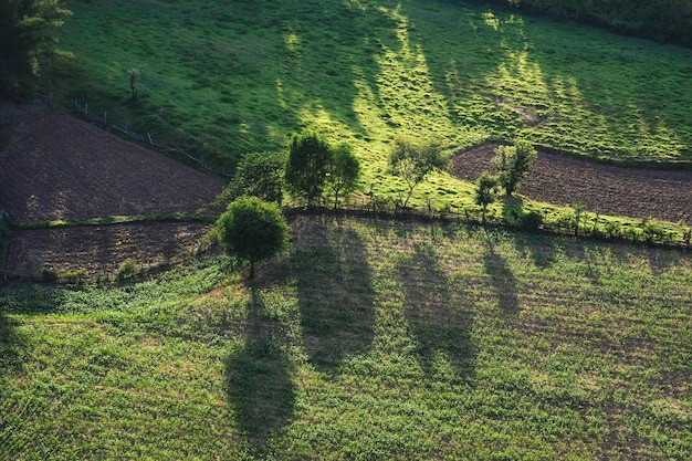 Vista desde arriba con un árbol en el campo asiático - vista aérea sobre la carretera de montaña que atraviesa el paisaje forestal y el área agrícola