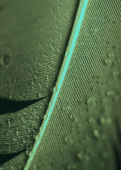 Una vista desde arriba de las gotas de agua sobre la pluma.