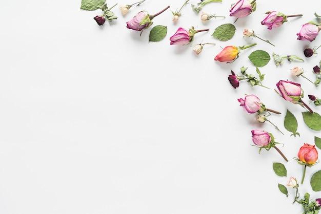 Vista desde arriba de hojas y flores
