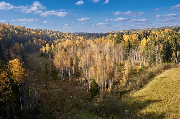 Vista desde arriba del soleado bosque de otoño amarillo