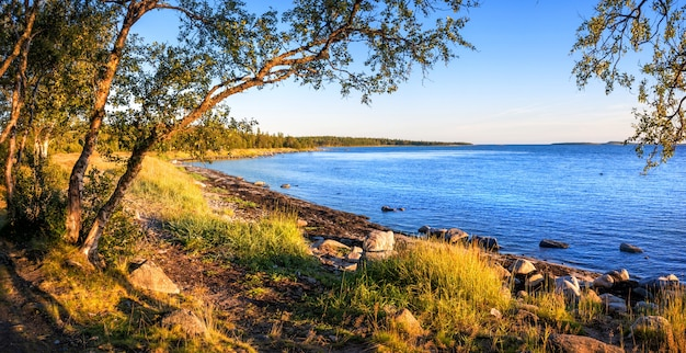 Vista del azul del mar blanco en las islas solovetsky, troncos sinuosos de árboles del norte en los rayos del sol poniente