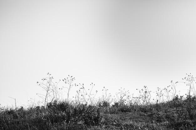 Vista en blanco y negro del paisaje.