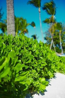 Vista del bonito colorido verde tropical con palmeras de coco con cielo azul