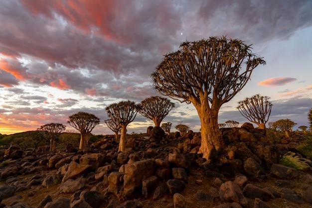 Vista del bosque de árboles de carcaj con hermoso cielo puesta de sol escena del cielo crepuscular en keetmanshoop, namibia