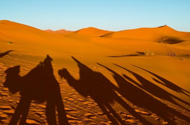 Vista de caravana viajando y sombras de camellos en la duna de arena en el desierto del sahara