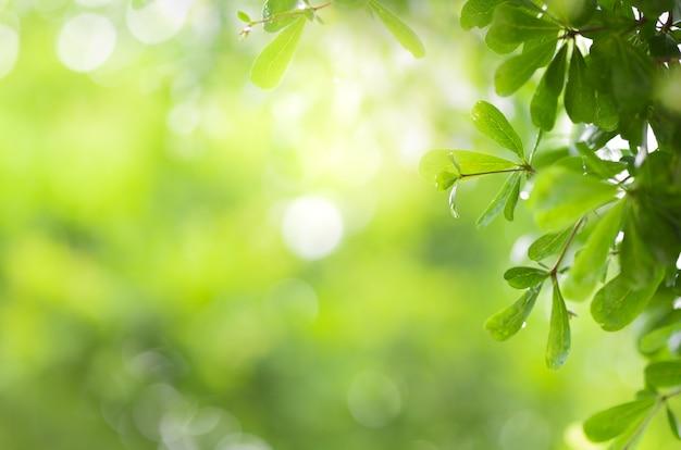 Vista de cerca de la hoja verde en la vegetación borrosa y la luz del sol en el jardín utilizando para plantas verdes naturales