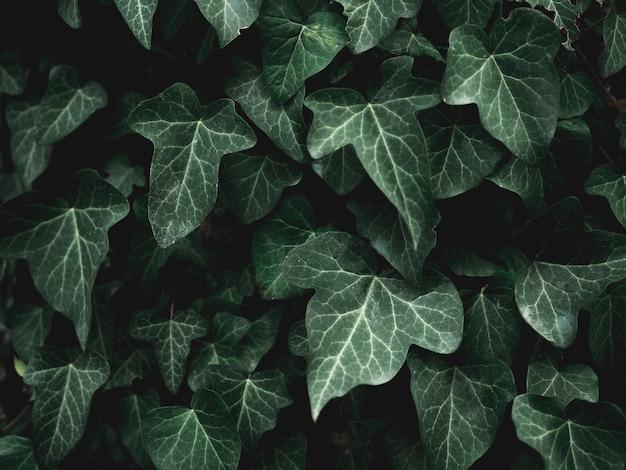 Vista cercana del concepto de hojas verdes