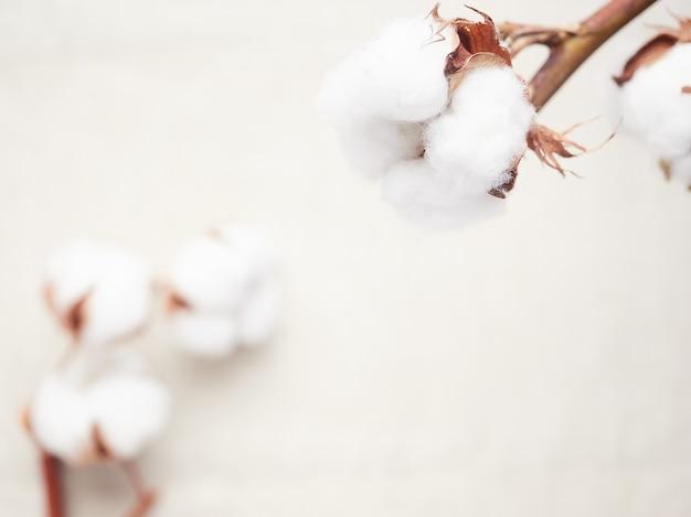 Vista cercana de la flor de algodón, fondo desenfocado