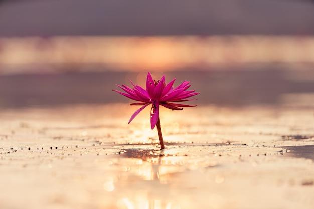 Vista cercana de una flor de loto en un estanque