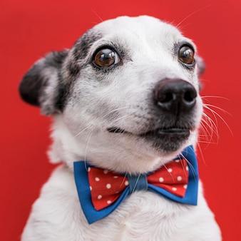 Vista cercana de hermoso perro con pajarita