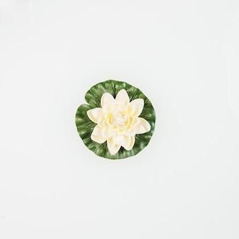 Vista de ángulo alto de hermoso loto sobre fondo blanco