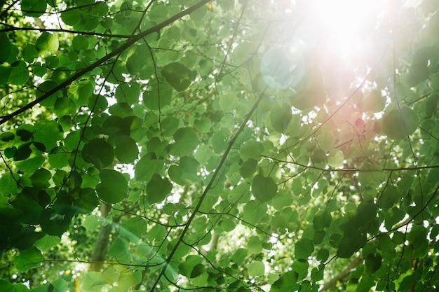 Vista de ángulo bajo de ramas de árboles